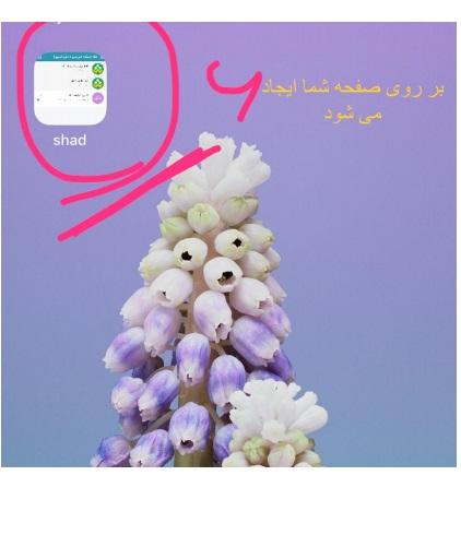 نصب نسخه ios اپلیکیشن شاد-1